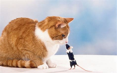 stand bullies important bullying sometimes yourself quotes why bully cat mouse its telegraph thinking
