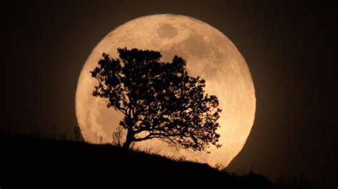 happened    moon trees  seeds