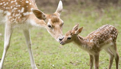 adorable baby animals   moms  daily dose