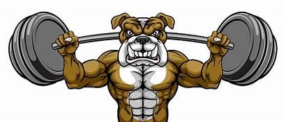 Lifting Weight Bulldog Mascot Builder Bodybuilder Pesi