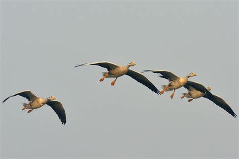 why migratory birds world migratory bird day