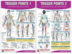 42 95 Trigger Point Poster Set