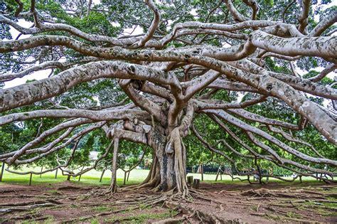 Botanischer Garten Sri Lanka by 10 Things To Do In Kandy Sri Lanka Atlas Boots