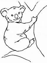 Koala Coloring Bear Printable sketch template