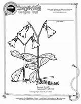 Coloring Trail Oregon Pages Botany Printable Getcolorings Surviving sketch template