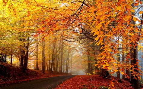 Beautiful Autumn Wallpapers by Beautiful Autumn Wallpapers The Wow Style
