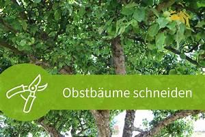 Bux Schneiden Wann : obstb ume schneiden wann ist der beste zeitpunkt ~ Lizthompson.info Haus und Dekorationen