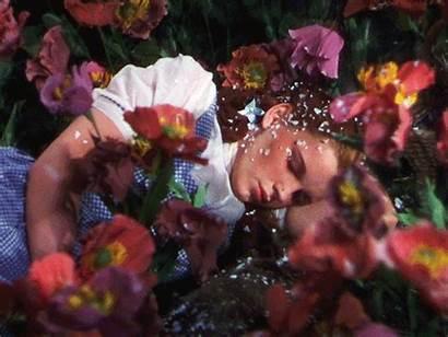 Wizard Oz Dorothy Sleep Wicked Flowers Witch
