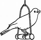 Coloring Bird Pages Canary Pet Robin Pets Drawing Birds Printable Wonder Colo Print Tocolor Cartoon Getcolorings Getdrawings Selig Josh Place sketch template
