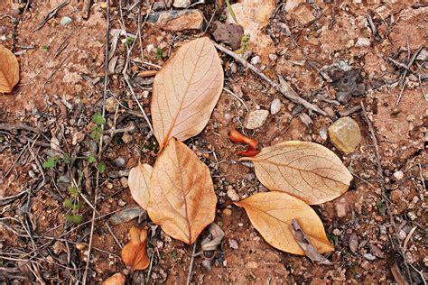 gambar pohon alam hutan cabang menanam daun bagasi