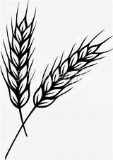 Wheat Plant Coloring Clip Line Drawing Worksheet Kindergarten Guide sketch template