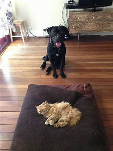 funny video of cats stealing dog beds travels and living With cat and dog furniture