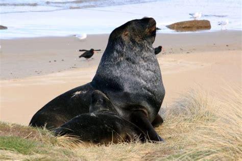 sea dog photo