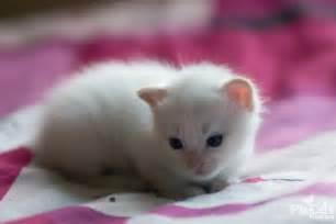 white cat names cat names from alonzo to zizi baby name nameberry