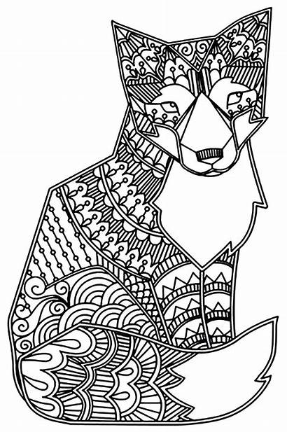 Fox Coloring Foxes Adult Simple Pages Animals
