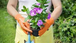 Blumen Für Schattige Plätze : zierpflanzen blumen und pflanzen zum anbau und zur ~ Michelbontemps.com Haus und Dekorationen