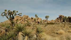 the best joshua tree national park vacation packages 2017 save up to c590 on our deals