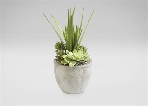 aloe and succulents in pot florals trees