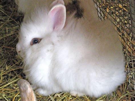 alimentazione conigli alimentazione coniglio nano conigli nani consigli per