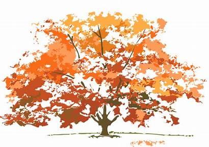 Autumn Fall Tree Clipart Clip Trees Maple