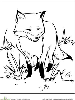 color  fox coloring page educationcom
