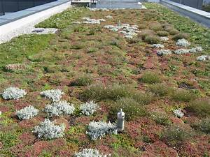 Extensive Dachbegrünung Pflanzen : leistungen stoewahs dachbegr nung ~ Frokenaadalensverden.com Haus und Dekorationen
