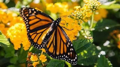 Butterfly Yellow 4k Flower Flowers Wallpapers 5k