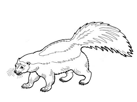 Kleurplaat Stinkdier by Skunk Coloring Pages To And Print For Free