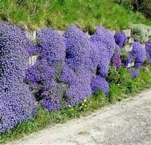 Couvre Sol Vivace : vivaces couvre sol de somptueux tapis de fleurs jardin ~ Premium-room.com Idées de Décoration