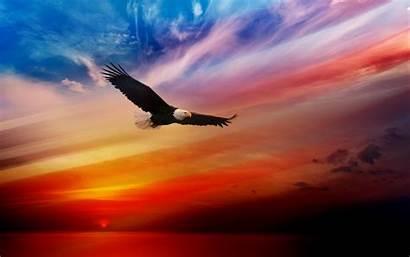 4k Eagle American Resolution Wallpapers Yodobi