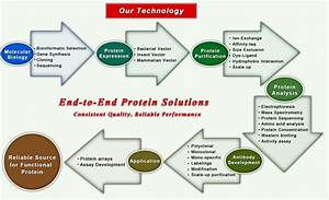 Protein Services