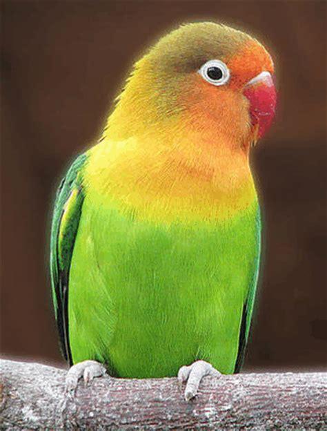 駘駑ents hauts cuisine les oiseaux qui nous enchantent par leurs plumages colorés page 56 supertoinette