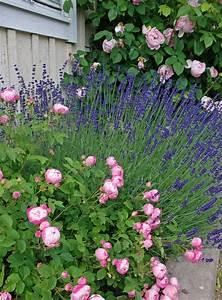 Rosen Und Lavendel : die besten 25 lavendel rosen ideen auf pinterest lila rosen lilafarbene hochzeitsblumen und ~ Yasmunasinghe.com Haus und Dekorationen