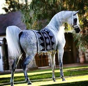 25+ best ideas about Arabian horses on Pinterest ...