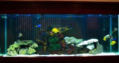 poisson dans un aquarium combien de poissons peut on mettre dans un aquarium