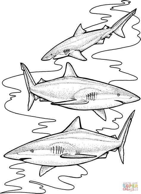 tiger sharks coloring page  printable coloring