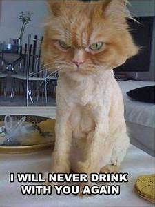 shaved cat funny quotes memes quote cat meme lol funny ...