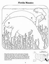 Coloring Manatee Pages Manatees Template Popular Exchange Sketch Coloringhome sketch template