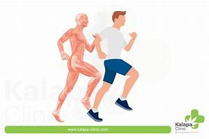 Cbd For Muscle Recovery After Sport