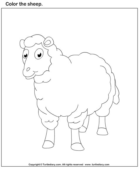 color  sheep worksheet turtle diary