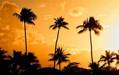 Palm Tree Wallpapers Trees Desktop Background Backgrounds