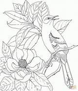 Lei Maile Drawing Coloring Pages Getdrawings sketch template