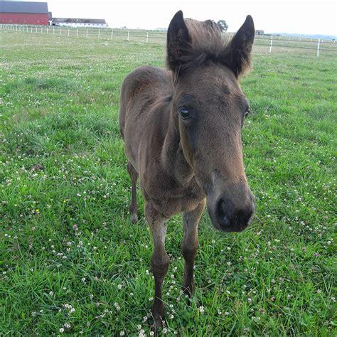 moose horse flickr