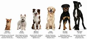 Dog care 101 size matters paperblog for Dog door size by breed