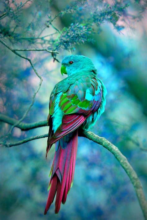 bird colors beautiful colorful bird