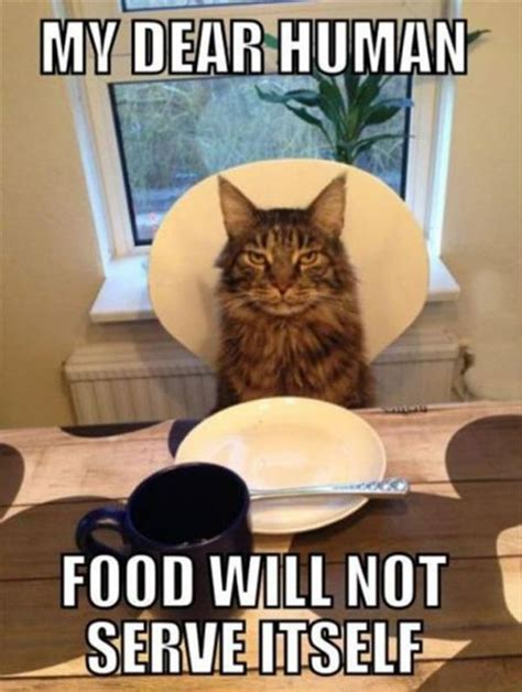 Food Cat Meme - 30 funny animal captions part 10 30 pics amazing creatures