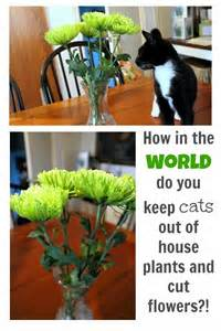 keep cats away how to keep cats out of house plants and cut flowers the
