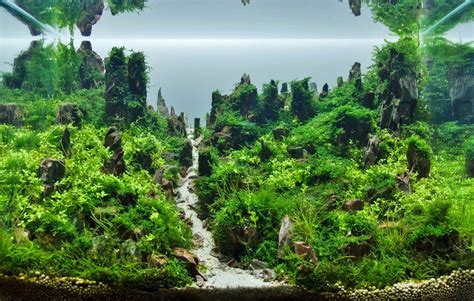 Amano Aquascape by Naturaquarium Und Aquascaping Aquascaping Wiki Aquasabi