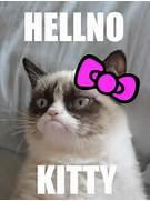 MEME ANGRY CAT NO imag...