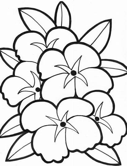 Bunga Mewarnai Gambar Anak Tk Untuk Sd